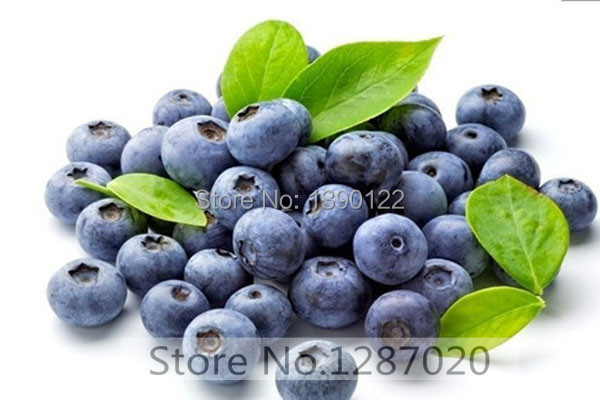 Aliexpress.com  Buy 100 purple kiwi fruit seed send 200 blueberry seeds for gift ,fruit seeds for home decoration buy direct from china from Reliable seed