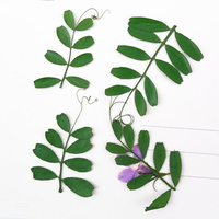 Linearleaf Vetchling Dried Flowers Specimens Press Flower DIY Handmade Material 1 Lot 100pcs Free Shipment