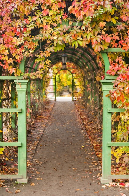 Fall Harvest Wallpaper Images Garden Arches Print Autumn Theme Photography Backdrops For