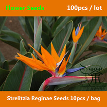 Flowering Plant Strelitzia Reginae Seeds 100pcs, Ornamental Plant Strelitzia Flower Seeds, Crane Flower Bird Of Paradise Seeds