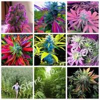 2017-New-Rare-Flower-Seeds-Rainbow-Hemp-Seeds-Variety-of-Colors-Hemp-Herbs-Medicinal-Vegetable-Seeds.jpg_200x200