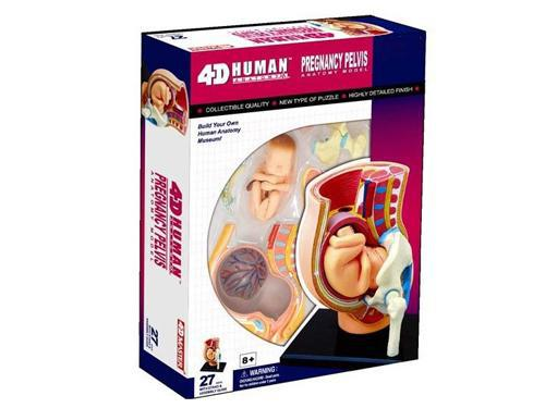 Children DIY Puzzle Human organ Anatomy Pregnancy woman Uterine ...