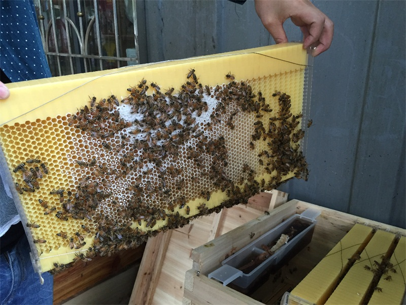 4 Pieces Honey Outflow Plastic Bee Hive Frames/Honey flow bee hive ...