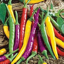 20 Chili Pepper Cayenne Blend seeds~Vegetable Plant