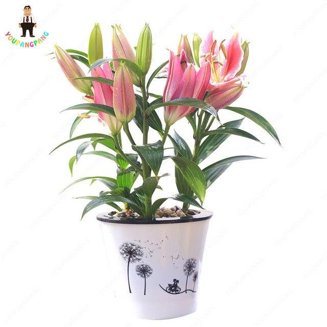 150 pz/pacco Bella Lilium Fiore Balcone Bonsai Cortile Giglio Fiore Pianta Decorazione Bonsais Plantas Fiori