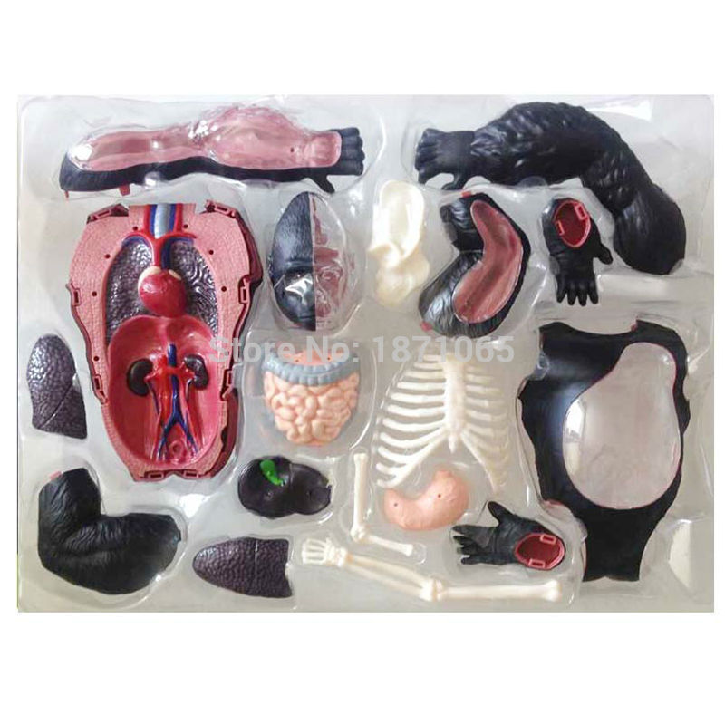 Anime Gorilla Anatomical Model Chimpanzees Skeleton Model Anatomy Toys Dimensional Anatomical Model Science Education Model Toy Toys & Hobbies