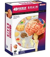 4D MASTE human brain assembled medical use educational puzzle toys cutaway model of the human