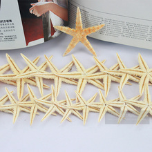 20Pc 6-8cm BIG Natural Starfish Wishing Bottle Sea Star Home Decoration Wall Stickers Adornment Organic Material Free Shipping