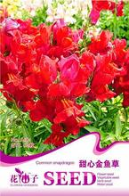 Hot Selling 60pcs Red Common Snapdragon Seeds, Flower Seeds, Bonsai Seeds, Home Garden DIY Free Shipping