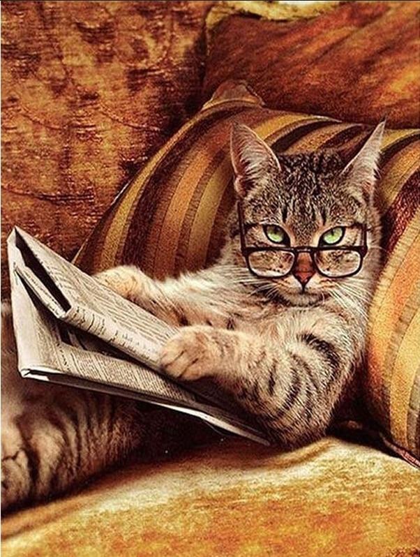 Diy 5D Needlework Glasses Cat Lying On The Sofa Read Newspaper Diamond Painting Mosaic Diamond Embroidery Home Decoration