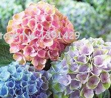 Promotion! Hot sale 50PCS Mixed Hydrangea Seeds Flowers Garden Plant Bonsai Viburnum macrocephalum Fort Free shipping