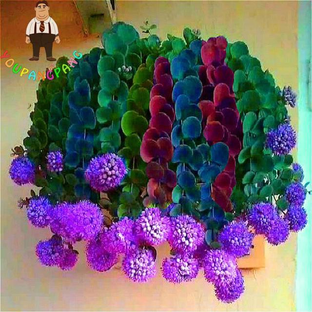 garten blumen lila, beste verkauf rare sukkulenten pflanzen 2017 kaktus garten blume, Design ideen