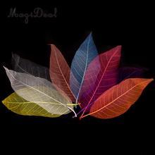 50 Uds. De hojas de esqueleto de Magnolia Natural, tarjeta con hojas, álbum de recortes, bricolaje, Color mezclado, utilizado para decorar tarjetas, paquetes de velas