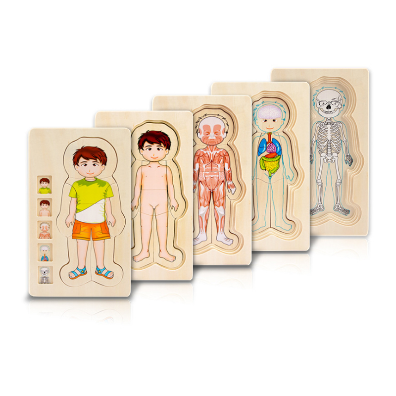 Human Body Body Structure Wooden Puzzles Educational Toys Boys Girls Puzzles Children Kids Wood Toys incredible human body