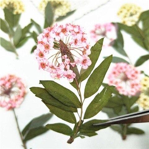Narciso em Hastes Flor para Faça Nova Pressionado Flores Secas Você Mesmo Decoração Remessa Livre 1 Lote – 120 Pcs 2020