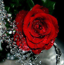 5D Diy Diamond Painting Cross Stitch Roses Flower diamond Crafts Round diamond mosaic Needlework Painting Flowers Home Decor