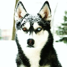 dril Menjahit Anjing Dekorasi