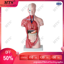High-end medical internal organs heart system structure torso 28CM human anatomical skeleton model medical teaching anatomical male genital organs model