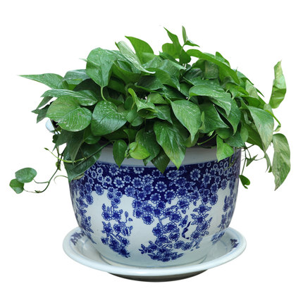 Jingdezhen Ceramic Bonsai pots Blue And White Porcelain Flower Pots With Tray Various Specifications Bonsai Pot