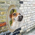 Modern Design Pets Dogs Cats Fence Window Big Bubble Shape Durable Acrylic Transparent Pet Lookout Window for All Pets