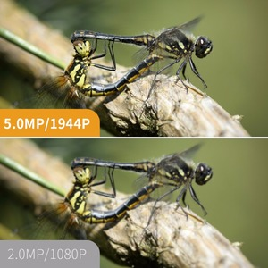 Image 4 - Antscope Wifi Endoscope Auto Focus Camera 1944P HD Mini Borescope Waterproof Endoscope Inspection Camera 4LED for IOS/Android 24