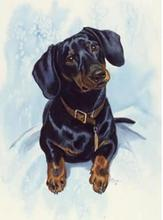 Black and Tan Dachshund Embroidery Picture