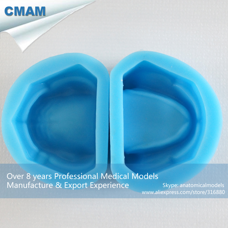 12598 CMAM-DENTAL17-1 Edentulous Jaw Plaster Model Rubber Mold ,Medical Science Educational Teaching Anatomical Models 12569 cmam dental10 cranial nerve model in oral cavity medical science educational dental teaching models