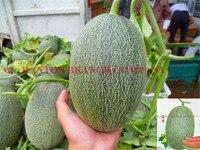 Original package 300pcs Qingyu melon seeds,  18% high Sugar content muskmelon seeds, super quality fruit seeds