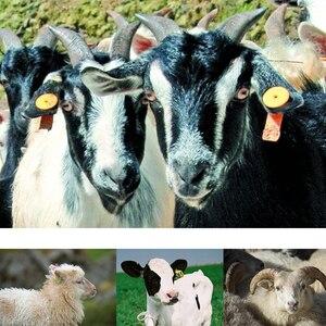 Image 5 - Ушная бирка, Овечий маркер аппликатор 001 100, Ушные бирки для козы, набор для идентификации, ушной тег с 2 штырьками, Ушные бирки, щипцы