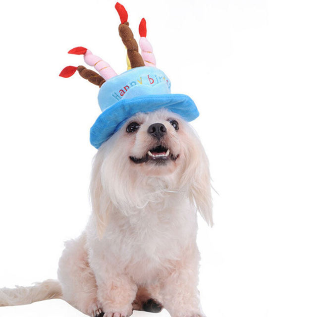 2018 New Creative Arrival Dog Puppy Birthday Cap Hat White Cashmere Dogs Pet Hats Caps With Cake Canddles Design Supplies In From Home Garden