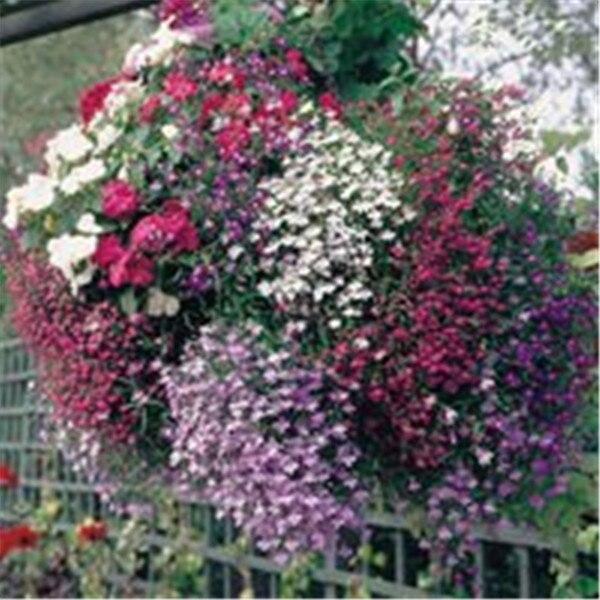 Новый Свежий 100 шт мешок лобелия завод, бонсай цветок Флорес, Creeper почвопокровные хлорофитум для сада, ландшафтный дизайн легко выращивать