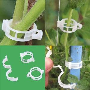 Image 2 - 50 szt. Klipsy pomidorowe krata roślina ogrodowa kwiat warzywa spoiwa sznurka roślin wsparcie cieplarnianych klip dostaw