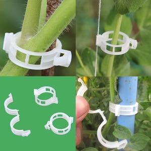 Image 2 - 50pcs Tomato Clips Trellis Garden Plant Flower Vegetable Binder Twine Plant Support Greenhouse Clip Supplies