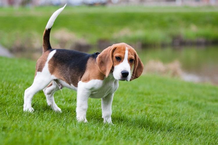 Fei Ye Paws Կանանց Վզնոց Punk Beagle & Coonhound Dog - Նորաձև զարդեր - Լուսանկար 6