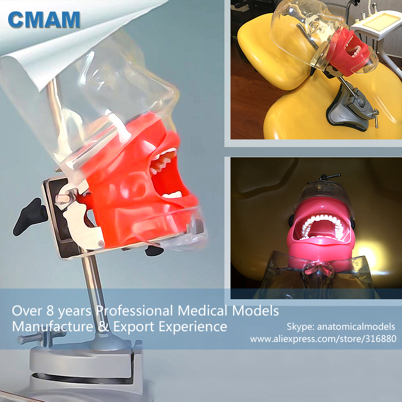 CMAM-DENTAL02 Teaching Simulator Unit Simple Dental Phantom Head, Dental Simulator Unit Teaching Head dental phantom head dental phantom phantom