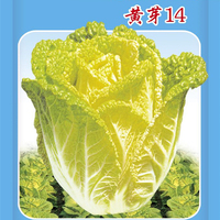1 Original Packing 10G Vegetable Seeds High Quality Cabbage seeds Free Shipping
