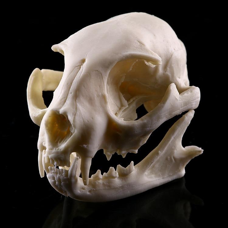Cat Resin Model Skull School Medical Animal Skeleton Model Supplies Teaching Resources Cat Skull