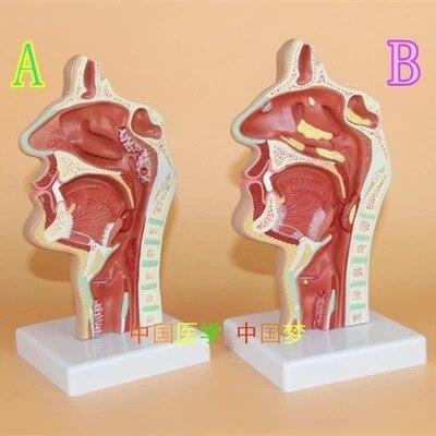 Nasal y garganta anatomía humanos boca y nariz ENT patología médica ...