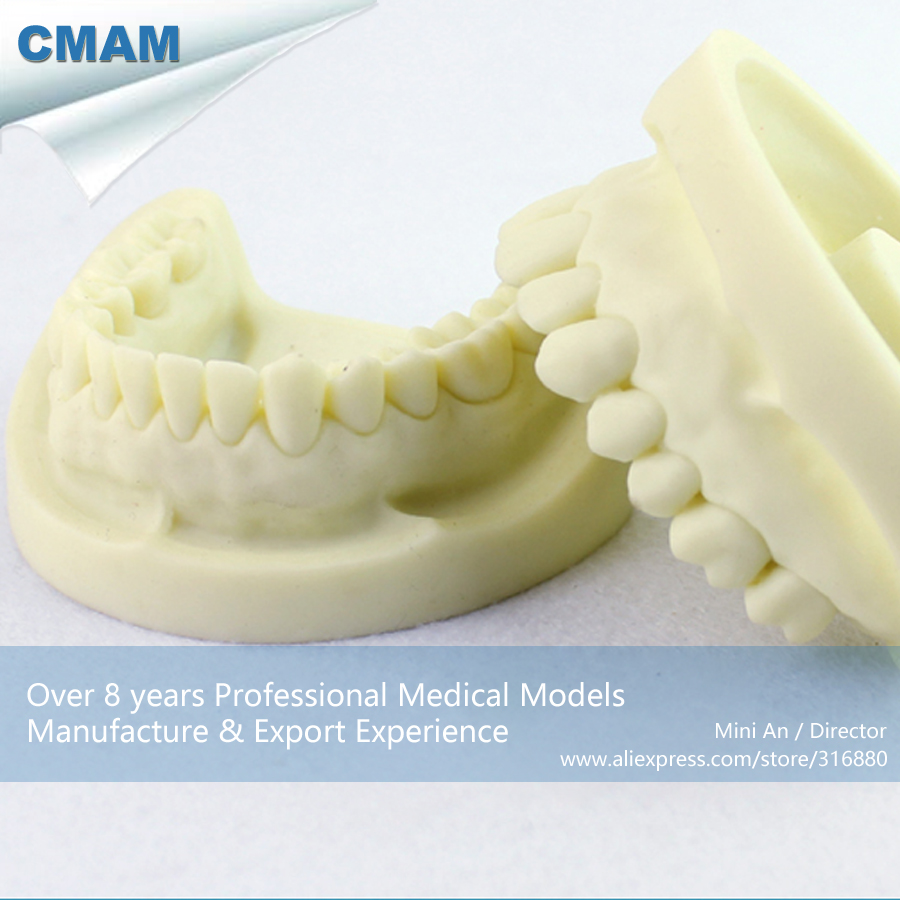 CMAM-DENTAL05 Tooth Prepared Practice Dental Model,  Medical Science Educational Teaching Anatomical Models кабель патч корд lanmaster twt 2sc 2sc m5 2 0 2x sc дуплекс sc дуплекс 2м lszh оранж