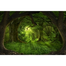 Laeacco Fairytale Green Forest Trees Grassland Shining Scene Photography Backdrops Vinyl Customs Backgrounds For Photo Studio