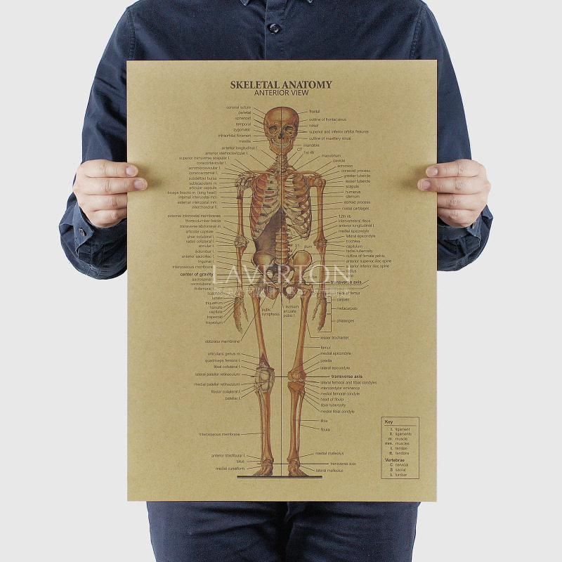 Online Shop Human Anatomy Bone Skeletal System Art Silk Cloth Poster