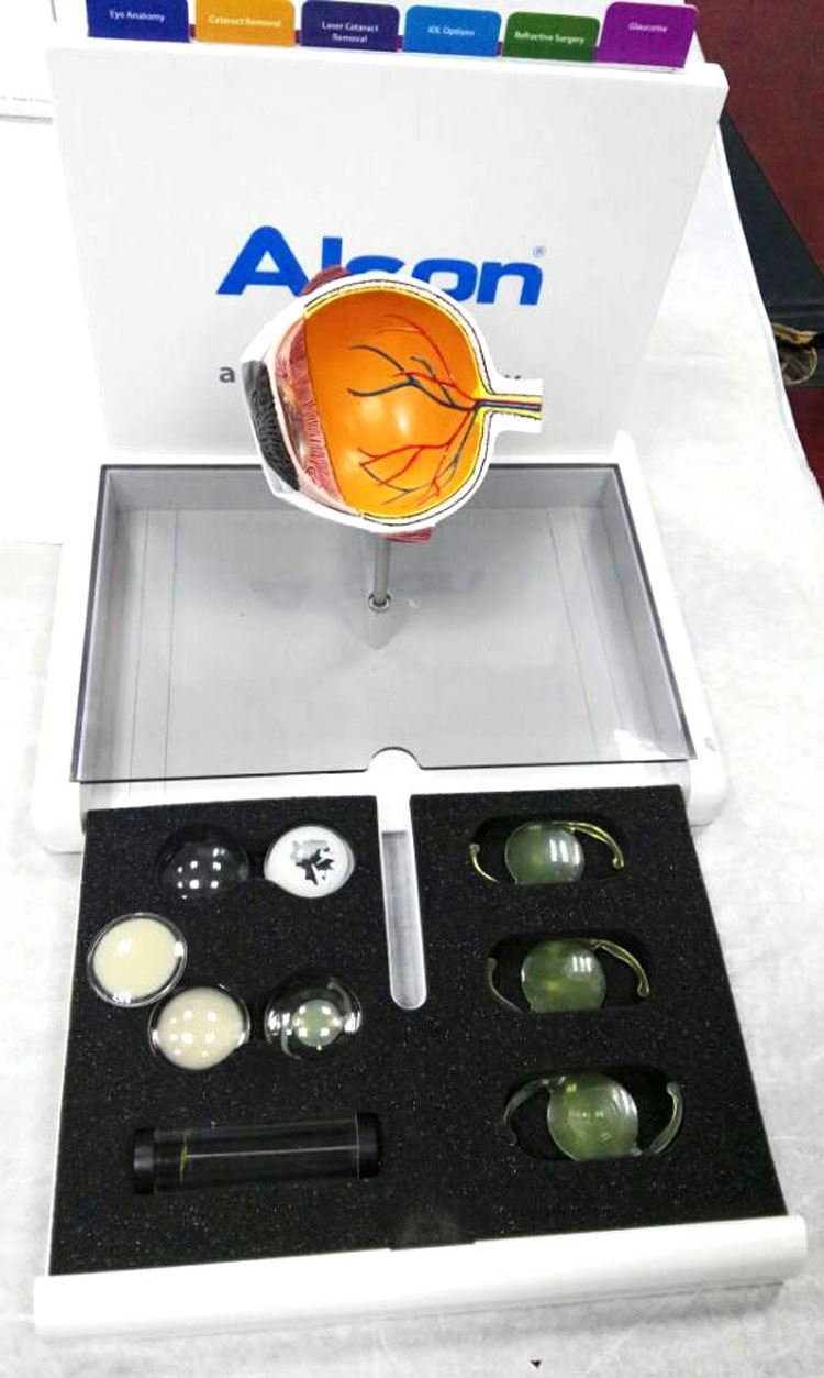 Cataract eye model Eye anatomy model Medical teaching AIDS-in Medical Science from Office & School Supplies