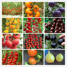 High quality 100 pcs Mixed tomato vegetables, potted plants, home garden, easy to grow fruits and vegetables Bonsai