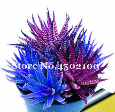50 adet Aloe Bonsai Mix Mükemmel Houseplants Etli Aloe Vera Bonsai Kullanımı Güzellik Yenilebilir Kozmetik Bonsai Herb Dikim