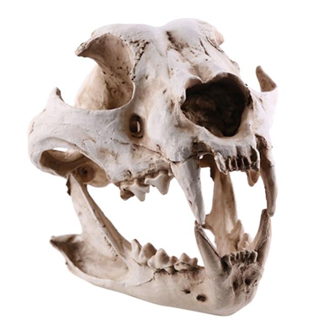 Resin Dog Canine Model Anatomy Skull Head Drawing School Figurine Decor Statues 1