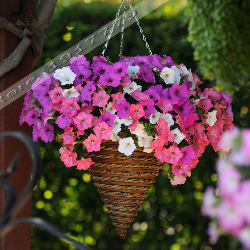 Charming 100pcs/Garden Petunia Seeds Rare Indoor Bonsai Petunia Flower Seeds For DIY  Home Garden Plant Hanging Baskets And Containers