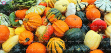 Giant Chinese pumpkin seeds NO GMO organic vegetable seeds Edible bonsai planting for spring farm supplies Best packaging 20pcs