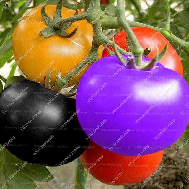 200pcs sweet tasty tomato Potted Planting Bonsais Edible food balcony potted plants bonsai vegetables for garden decoration