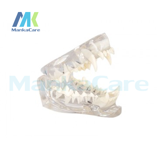 Manka Care Cat Dentition Mode Oral Model Teeth Tooth Model