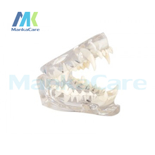 Manka Care – Cat Dentition Mode Oral Model Teeth Tooth Model